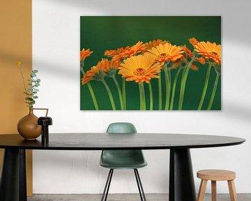 Gerbera Blumen Orange - Asteraceae von Christel Bekkers