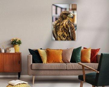 Falke von Peter Leenen