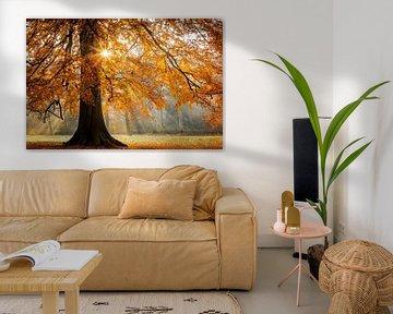 Herbstfarben im Wald von Original Mostert Photography