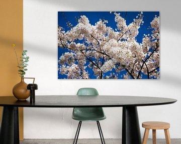 Sakura von Peter Leenen