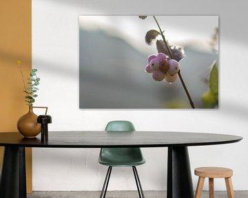 rosa Schneebeere von Tania Perneel