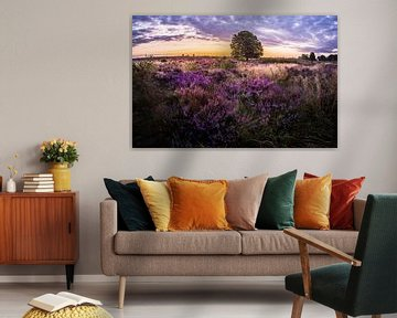 paarse Heide in Ede