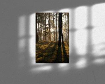 Ochtend licht door de bomen