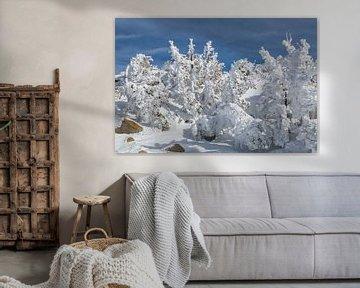 Met sneeuw beladen bomen van Peter Leenen
