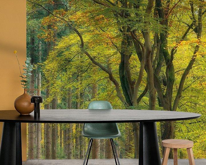 Sfeerimpressie behang: Dansende beukenbomen in de herfst, Veluwe, Nederland van Sjaak den Breeje Landschapsfotografie