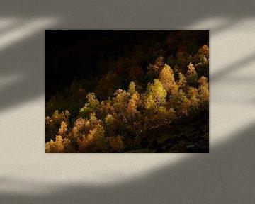 Berkenbomen in het ochtendlicht van Max Schiefele