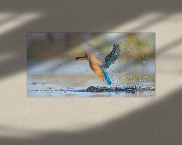 IJsvogel - panorama van IJsvogels.nl - Corné van Oosterhout