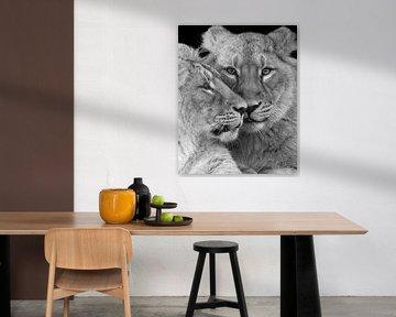 Nahaufnahme von zwei Löwenjungen von Patrick van Bakkum