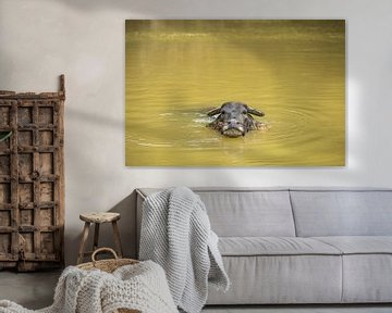 Waterbuffel in rivier van StephanvdLinde