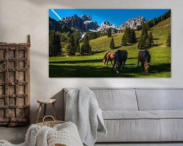 Paarden in de Alpen van Jens Sessler