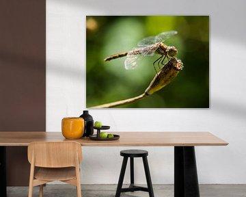 Libelle von Martijn Wit