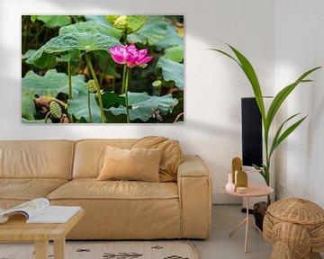 Blühender Heiliger Lotus von Peter Leenen