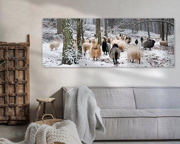 kudde schapen in besneeuwd bos
