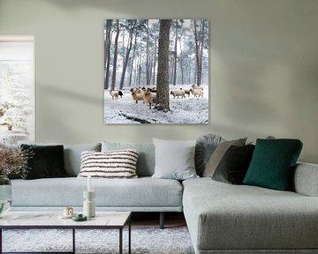 Schafe im verschneiten Wald von anton havelaar