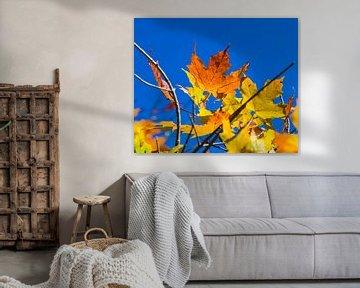 Natuurlijke herfstkleuren van Peter Leenen