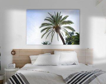 Zonnestralen door de palmboom van Angeline Dobber