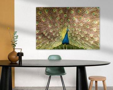 Ein blau-grüner Pfau breitet seine Federn aus. von Jennifer Hendriks