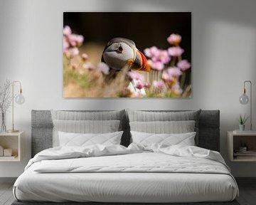 Papageientaucher, Fratercula arctica von Gert Hilbink