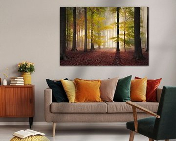 Toutes les couleurs d'automne dans une forêt sur Rob Visser