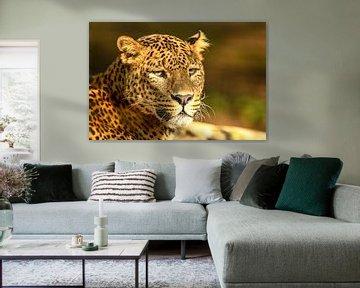 Leopard in der Sonne ruhend von Sjoerd van der Wal