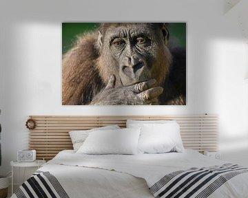 Gorilla Nahaufnahme Porträt von Sjoerd van der Wal