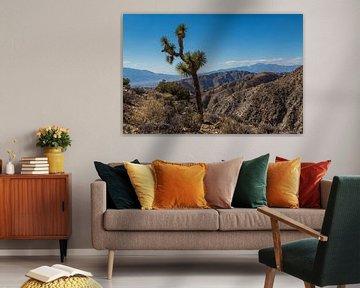 Joshua tree in de Mojave woestijn van Peter Leenen