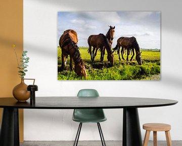 Paarden in de wei 2