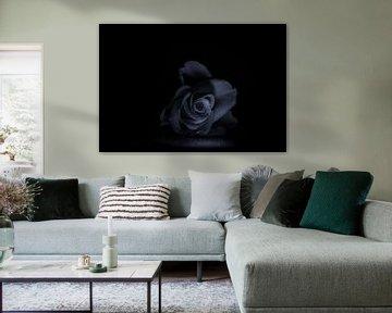 Schwarze und weiße Rose von Claudia De Vries