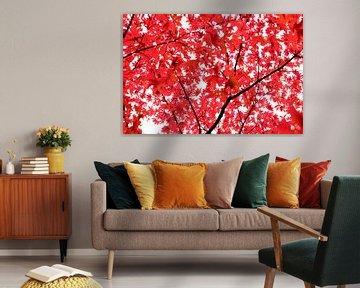 Is het oranje of rood? van Samira Uddin