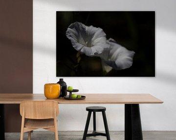 Weichzeichner, romantische weiße Blumen von Photo Henk van Dijk