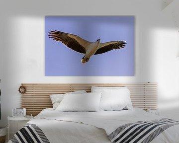 Fliegender Fischadler von Photo Henk van Dijk