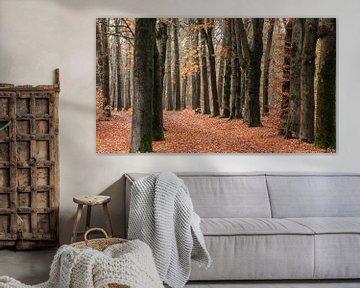 Buchenallee im Herbst von Dick Doorduin