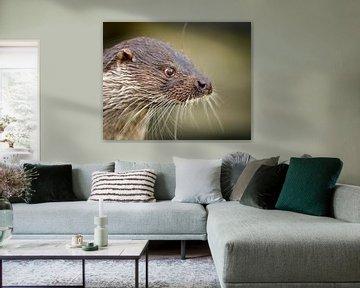 Otter close-up van Patrick van Bakkum