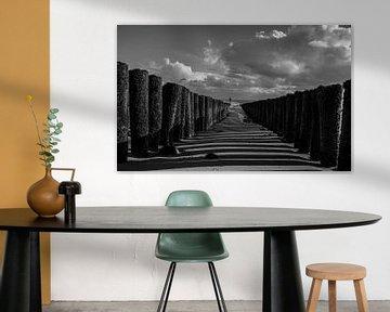 Schwarz-Weiß von Stephan Scheffer