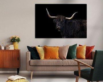 Schotse Hooglander, portret in zwart van Gert Hilbink