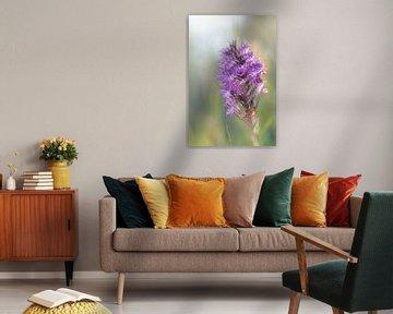 Orchidee von Ron van Gool