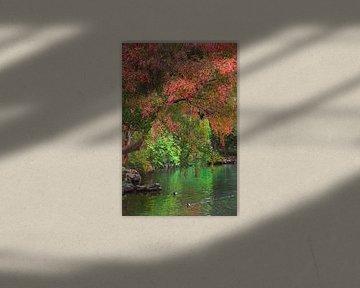 De rode boom van Anouschka Hendriks