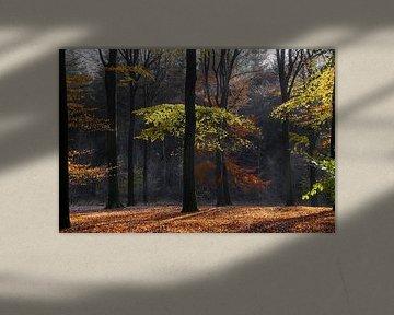 Forêt d'automne sur Ad Jekel