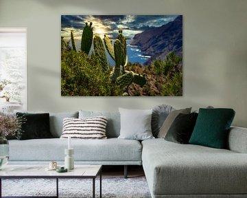 Kakteen und Steilküste auf La Gomera von Max Steinwald