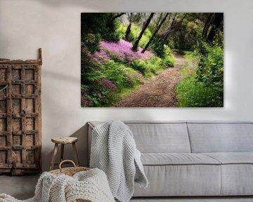 Sentier forestier dans la forêt des contes de fées de La Gomera sur Max Steinwald