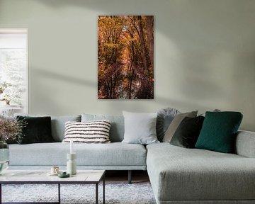 Bäume in Herbstfarben von Stephan Scheffer