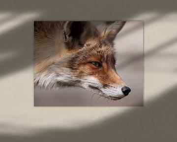 Fuchs von Loek Lobel