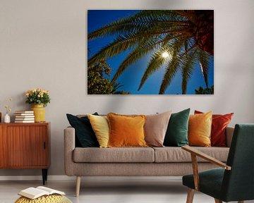 Palmboom en schitterende zon met blauwe lucht.