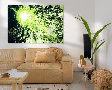 Zonnestralen door groene bladeren van een plataan (boom)..