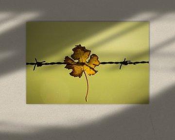 Gevangen in prikkeldraad