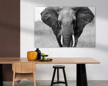 Afrikanischer Elefant von Pieter De Wit