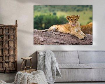Leeuwenwelp van Pieter De Wit