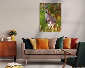 Känguru von Anouschka Hendriks