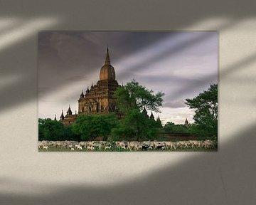 Hirte mit seiner Herde für den Tempel von Koen Boelrijk Photography