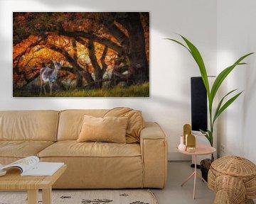 Herfst hert van Arjen Noord